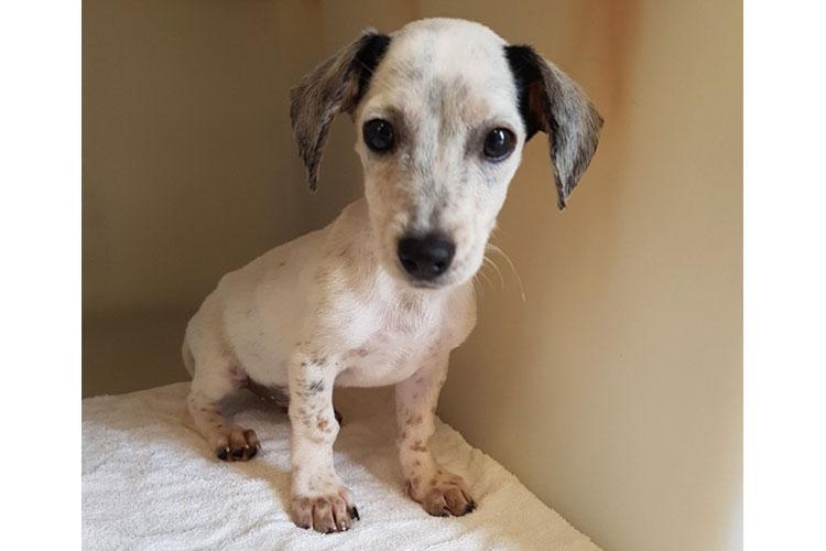 Lenny (white & black puppy)