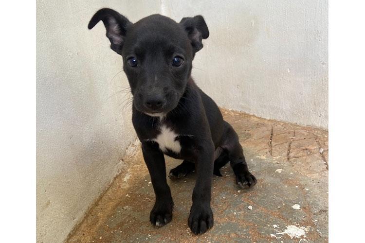 Luka (black puppy)
