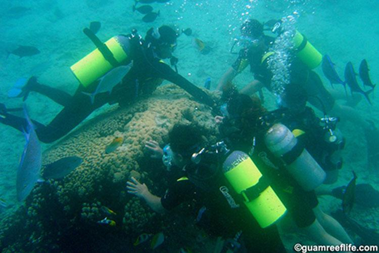 A dive instructor teaching his students to touch and hold onto a coral colony. Photo credit: David Burdick, Guam Reef Life.