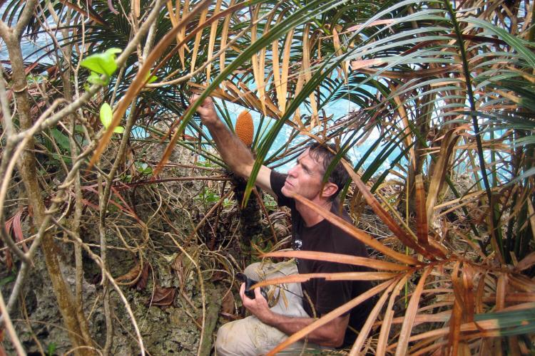 Thomas E. Marler, a research scientist with the University of Guam's Western Pacific Tropical Research Center, has been studying Guam's native cycad since the 1990s. Photo courtesy of University of Guam