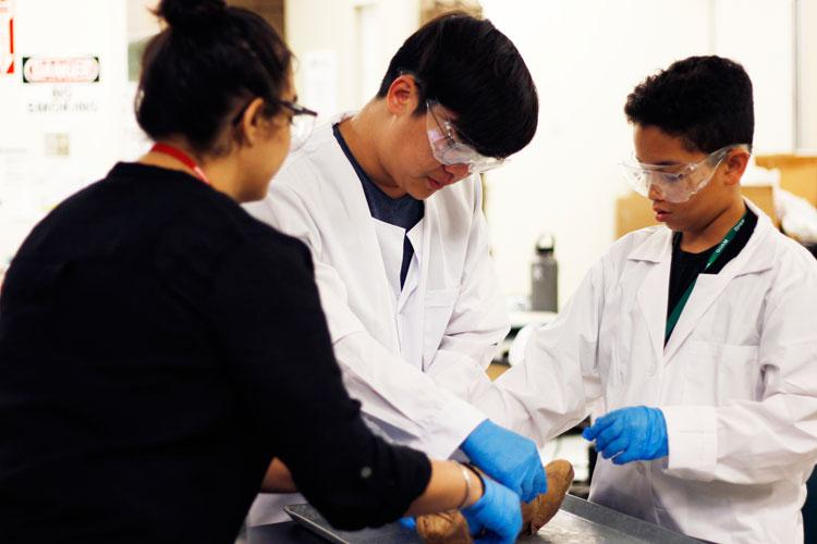 Teaching Assistant Resham Hemlani, left, guides Jinwon Han, center, and Xian Muna-Brecht on a pig dissection activity during the Guam GENE-ius program in April. (Photos courtesy of University of Guam)