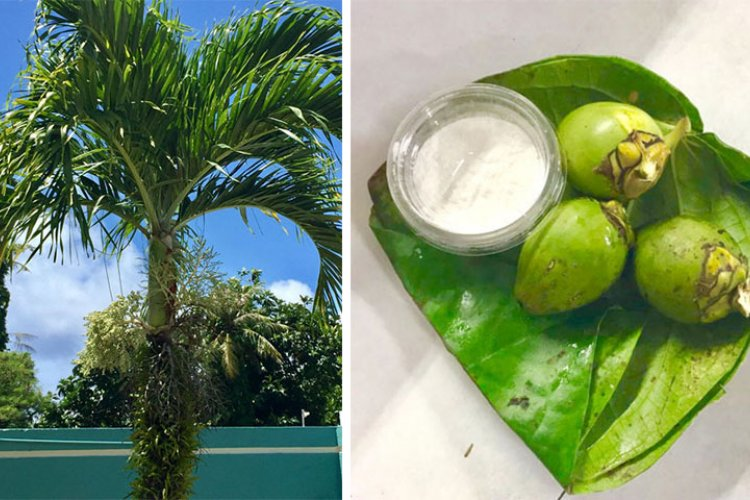 Guam's Passion for Pugua   Stripes Guam