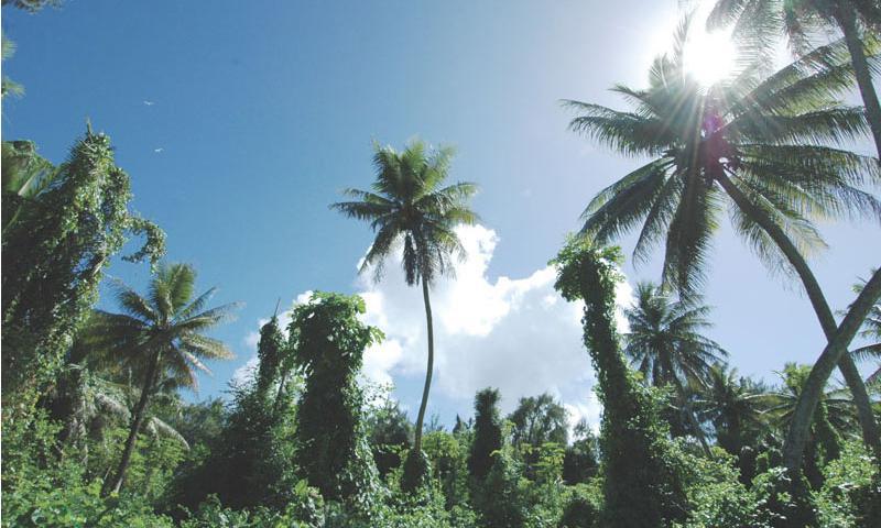 The vegetation on Cocos Island near Guam offers striking views