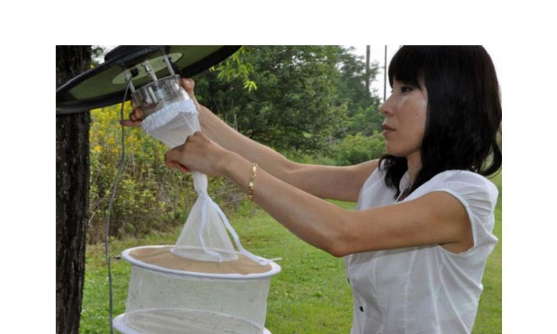 Hyon Chu So, 51st Aerospace Medicine Squadron Public Health technician, removes a mosquito trap at Osan Air Base, South Korea on July 12, 2012. (Michael Battles/U.S. Air Force)