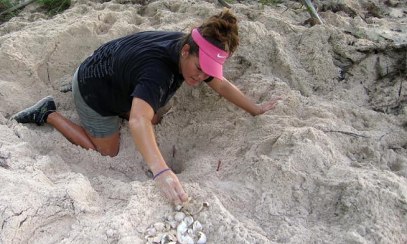 Marylou Staman, University of Guam Sea Turtle Monitoring, Protection and Educational Outreach on Guam project manager, inventories a nest in the Tarague Basin on Andersen Air Force Base, Guam, June 25, 2014. Staman and a scientific research team monitor the nests daily and inventory them afterward by counting leftover eggshells to determine how many hatchlings emerged. (Courtesy photo)