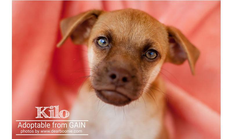 Kilo (pup)
