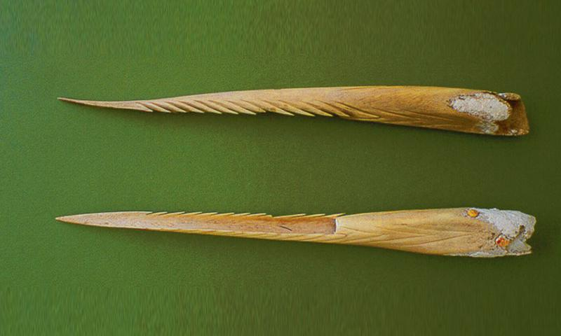 Human bone spear tips. Photo provided by Dr. Judy Flores courtesy of the CNMI Historic Preservation Office