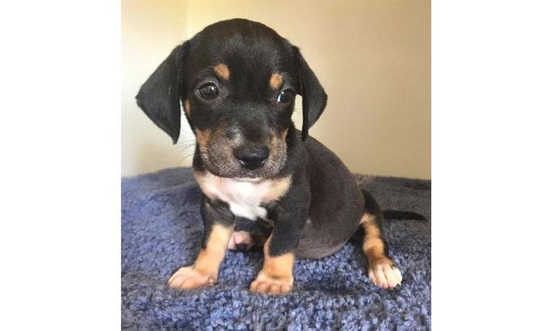 Feli (pup)