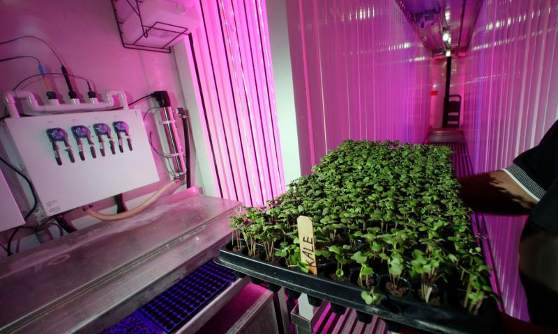 In this June 22, 2016 photo, Don Holman, an engineer at the U.S. Army Natick Soldier Research, Development and Engineering Center in Natick, Mass., holds sprouted kale under LED grow lights inside a refurbished shipping container. Holman is testing the idea of growing vegetables hydroponically in a shipping container that could be put on board a submarine to provide fresh vegetables to sailors. 	 Elise Amendola/AP Photo