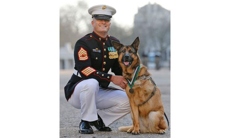 Gunnery sergeant Christopher Willingham, of Tuscaloosa, Alabama, USA, poses with US Marine dog Lucca, after receiving the PDSA Dickin Medal, awarded for animal bravery, equivalent of the Victoria Cross, at Wellington Barracks in London, Tuesday, April 5, 2016.  Frank Augstein/AP