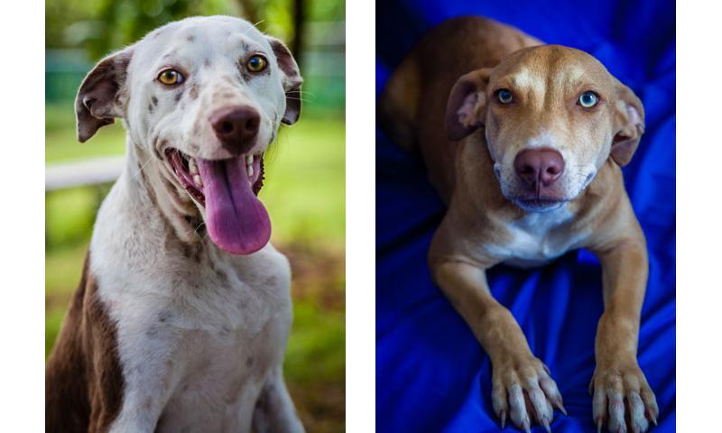 Huey (left) and Hunni (right).