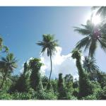 The vegetation on Cocos Island near Guam offers striking views