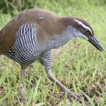 Photos by Guam Visitors Bureau